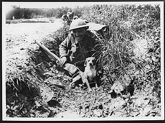 World War One Dog