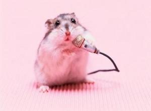 hamster singing